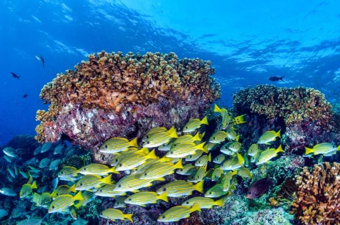 barrera-de-arrecifes-2