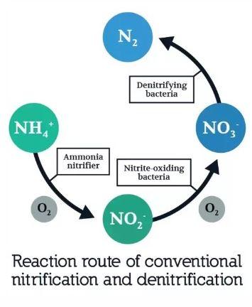 ciclo nitrogeno
